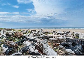 Logs on bare sandy beach of Oregon Sand Dunes National Recreation area, West Coast, USA
