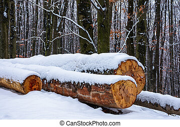 logs on the snowy slope in forest. lovely nature scenery in...