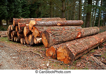 A logs neatly stacked near the forest path