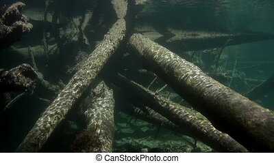 Logs underwater in sunlight in water of Lena River in Siberia of Russia. Unique relaxation video about nature.