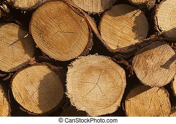 Logs, Urkiola, Bizkaia, Basque Country, Spain