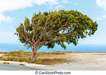 loin, mer, arbre, vent soufflé