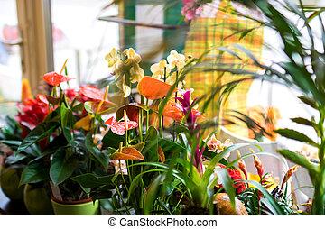 loja flor