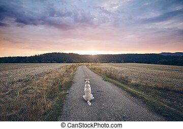 lojal, solnedgång, hund, väntan