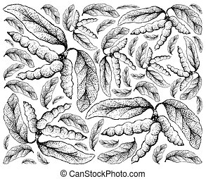 lomentaceum, main, dasymaschalon, fond, fruits, dessiné