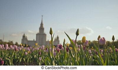 Lomonosov State University, iconic building and sightseeing...