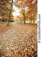 Colorful London Autumn, Richmond Park, November