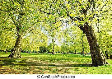 londres, jardín, st james, primavera