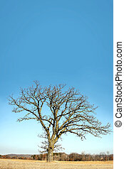 Lone Bare Branched Winter Tree in the Country