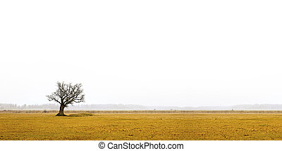 bare oak tree in gloomy landscape - Lone bare oak tree in...