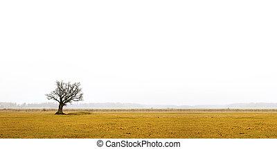 bare oak tree in gloomy landscape - Lone bare oak tree in ...