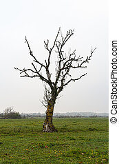 Lone bare tree in a grassland