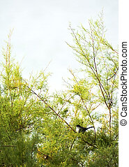 Lone bird perched on a branch