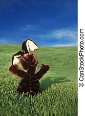 Brown Easter Bunny in a Grass Field
