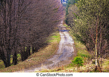 Lone country road in Carpathian mountains