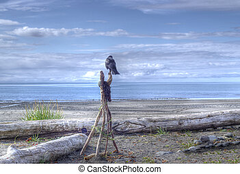 Lone crow looking out to sea