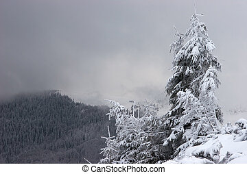 Lone fir tree with snow clouds in background