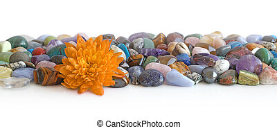 Lone golden flower head and crystal header