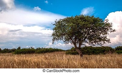 Lone green tree on a rural field and sky with clouds, 4k, time lapse