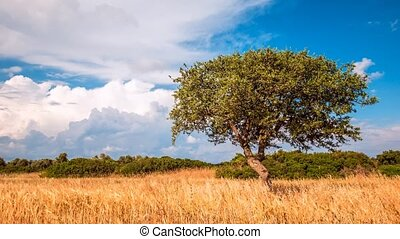 Lone green tree on a rural plain and blue sky with clouds, 4k, time lapse