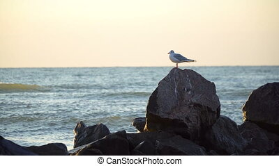 lone gull sits on a rock in the sea on the horizon in the...
