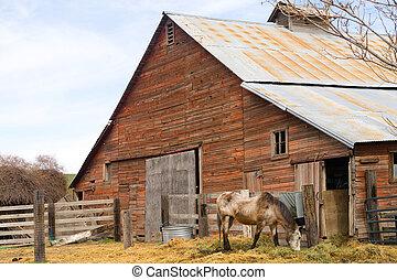 Lone Horse Grazes On Feed Farm Ranch Barn Corral