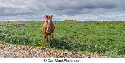 Lone horse in a pasture meadow walks toward camera at roadside.