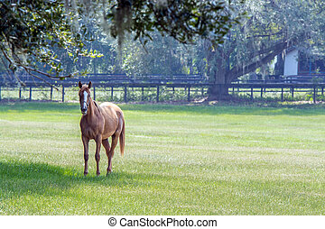 Lone horse in a Southern pasture