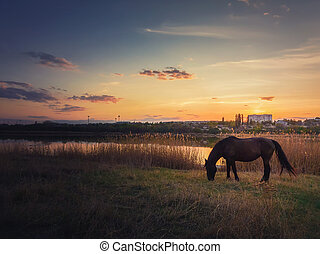 Lone horse silhouette grazing grass on a spring pasture near lake against warm sunset. Idyllic rural landscape and a black mare meets the evening on the meadow. Calm countryside sundown scene.