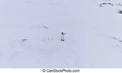 Lone king penguin wave wing antarctica aerial view
