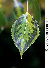 Lone Leaf - Lone Green leaf