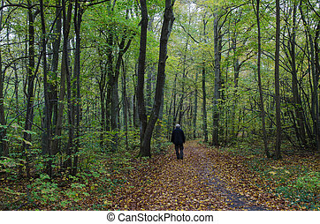 Lone man at autumn walk
