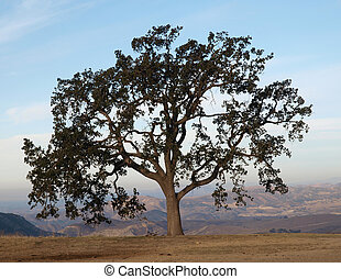 Lone Oak tree with a view in Chatsworth California.