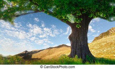 Lone oak tree on a summer meadow