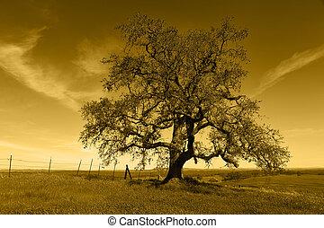 Lone Oak Tree Silhouette