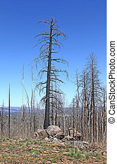 Lone Pine After the Fire
