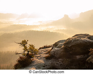 Lone pine over a cliff in the mountains at dawn