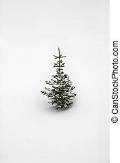 Lone pine sapling in snow.