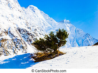 Lone pine tree in the mountains
