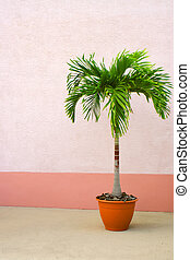 potted palm tree - lone potted palm tree against a wall with...