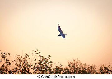 Lone seagull flies in the dawn sky