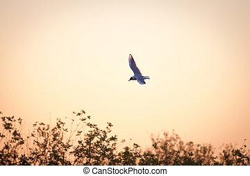 Lone seagull flies in the dawn sky