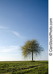 Lone spring tree