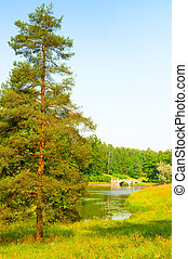 lone spruce near the pond