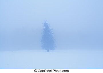 lone spruce tree in dense winter fog
