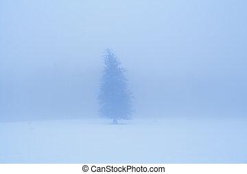 lone spruce tree in dense winter fog