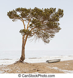 Lone tree and boat on the shore of frozen Lake Baikal, Russia