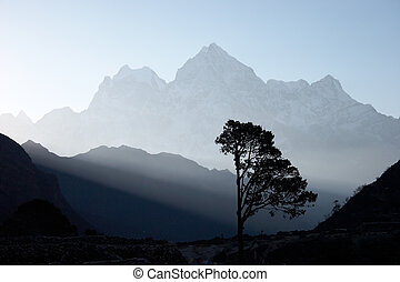 Lone tree near Thame village with Thamserku mountain in background lit by morning sunshine. Everest region, Himalaya, Nepal.