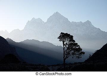 Lone tree at sunrise, Himalayas, Nepal - Lone tree near...
