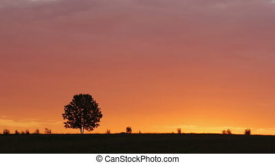 Lone tree at sunrise